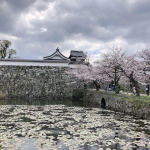 April - Hanami