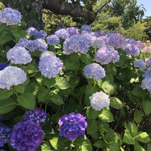 June - Takotoyama Park