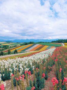 Daisy Braid (Tokyo) Rainbow fields at Shikisai no Oka, Furano, Hokkaido.